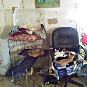 Ferret Cage as Cat Condo
