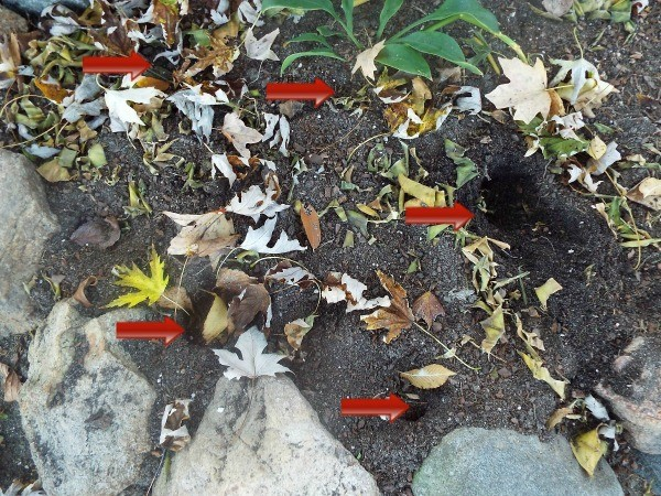 Peppers as Squirrel Deterrent