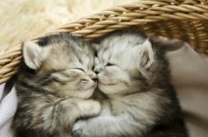 Kittens sleeping in a basket.