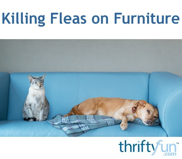 Fine Killing Fleas On Furniture Thriftyfun Camellatalisay Diy Chair Ideas Camellatalisaycom