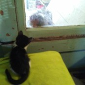 kitten looking through window at rooster
