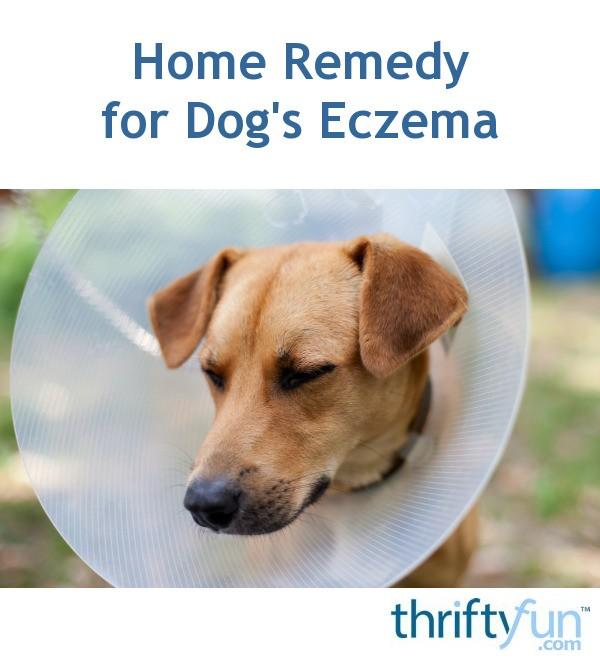 Home Remedy For Dog's Eczema