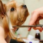 A got having it's hair cut by a groomer.