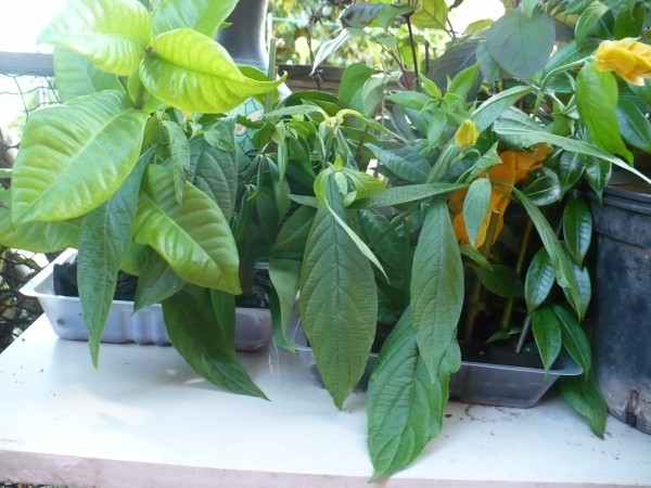 Easily Root Flower and Tree Cuttings