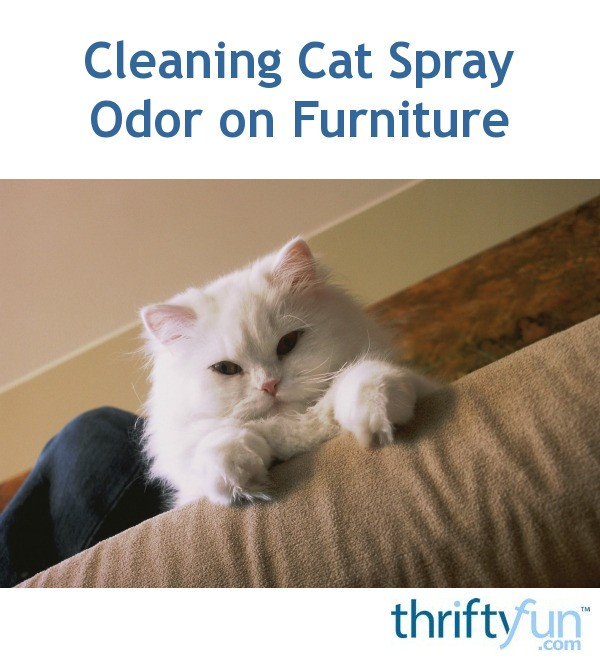 Superb Cleaning Cat Spray Odor On Furniture Thriftyfun Bralicious Painted Fabric Chair Ideas Braliciousco
