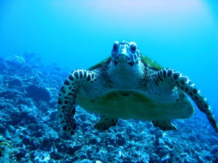 Underwater Adventure in Tahiti
