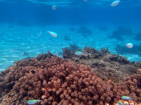 coral and fish in beautiful blue water