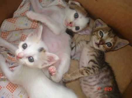 three kittens in a box
