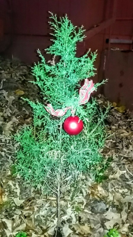 play on Charlie Brown's poor little Christmas tree