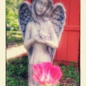 angel figurine behind a rose blossom