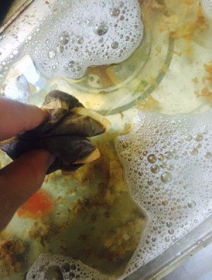 adding used tea bags to sink