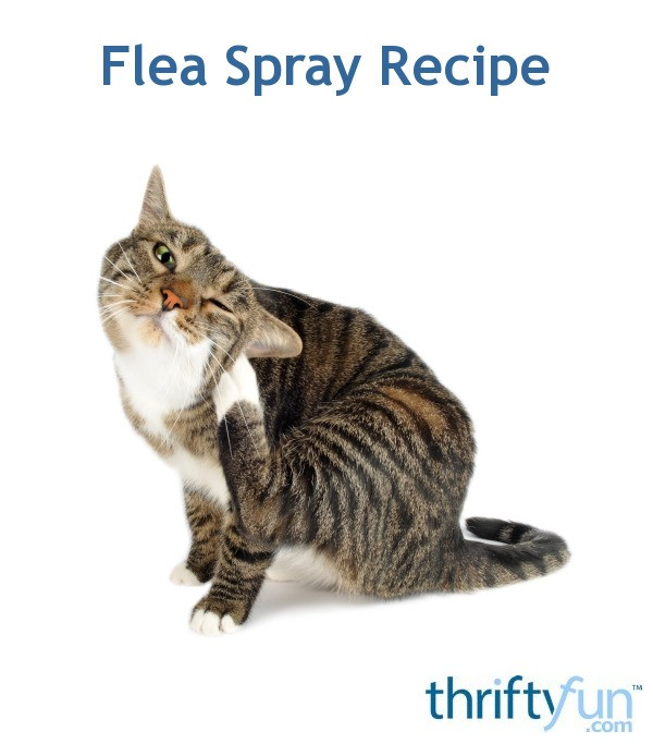 Homemade Flea Spray Recipe Thriftyfun