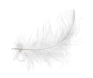 A white feather on a white background.