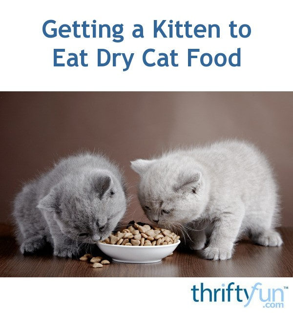 Getting Kittens To Eat Dry Food