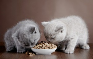 Two kittens eating from a bowl of dry food.