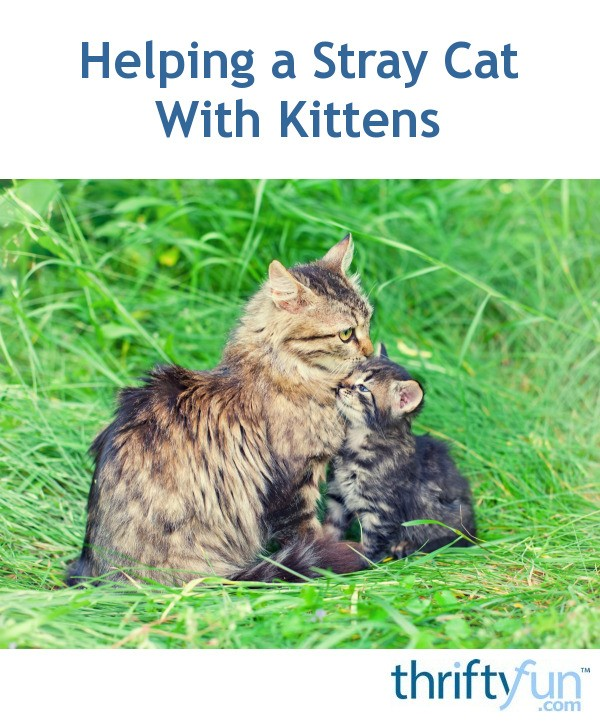 how to catch a stray cat with kittens