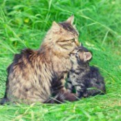 A mama cat with her kitten outside.