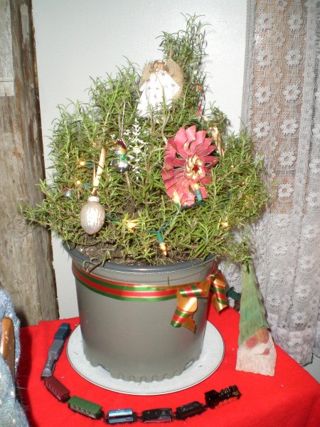 rosemary decorated as mini Christmas tree with tiny train encircling pot base