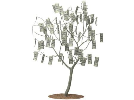 Photo of a money tree.