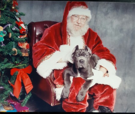 Dante sitting in Santa's lap