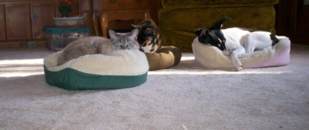 two cats and a dog lying in their beds