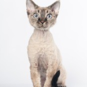 silver and gray coated cat