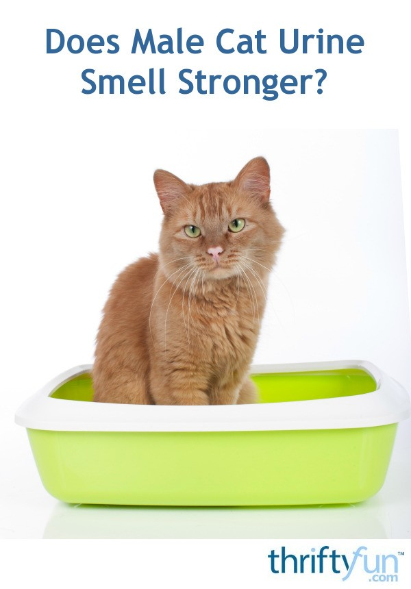 Does Male Cat Urine Smell Stronger? | ThriftyFun