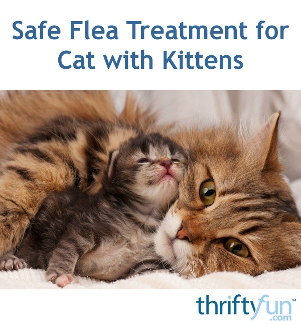 How To Treat Fleas On A Pregnant Cat