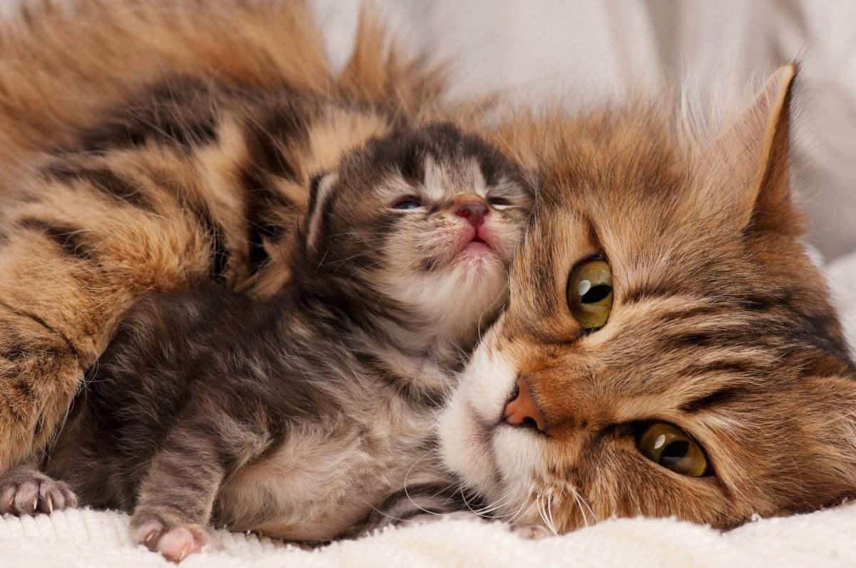 كم مدة رضاعة القطط: اعرف كل التفاصيل هنا
