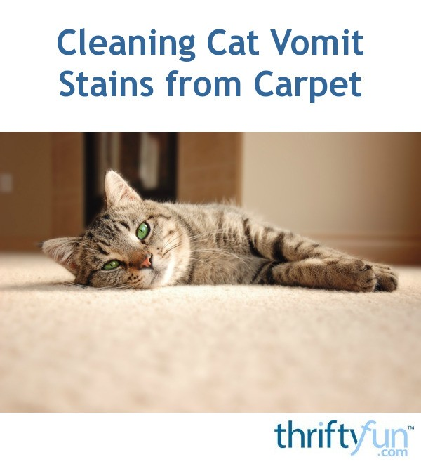 Cleaning Cat Vomit Stains from Carpet