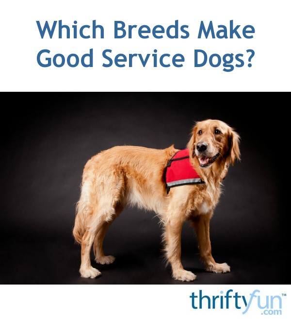 Which Breeds Make Good Service Dogs Thriftyfun