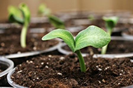 Plant seedlings.
