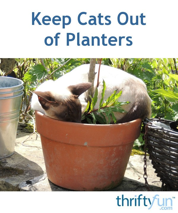 Keeping Cats Out Of Planters Thriftyfun