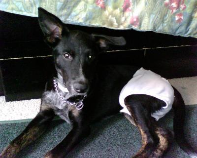 RE: What Breed Is My Dog (German Shepherd Mix)