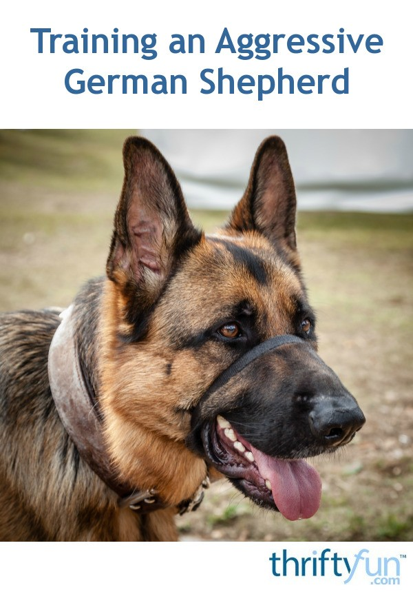 Training An Aggressive German Shepherd Thriftyfun