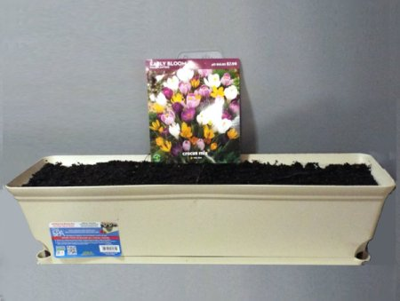 Mid Winter Flower Bulb Bargains- discounted planter and crocus corms