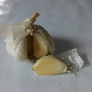 A head of garlic with one clove removed.