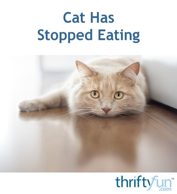 My Cat Hasn T Eaten In  Hours