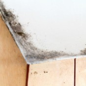 Black mold on a bathroom ceiling.