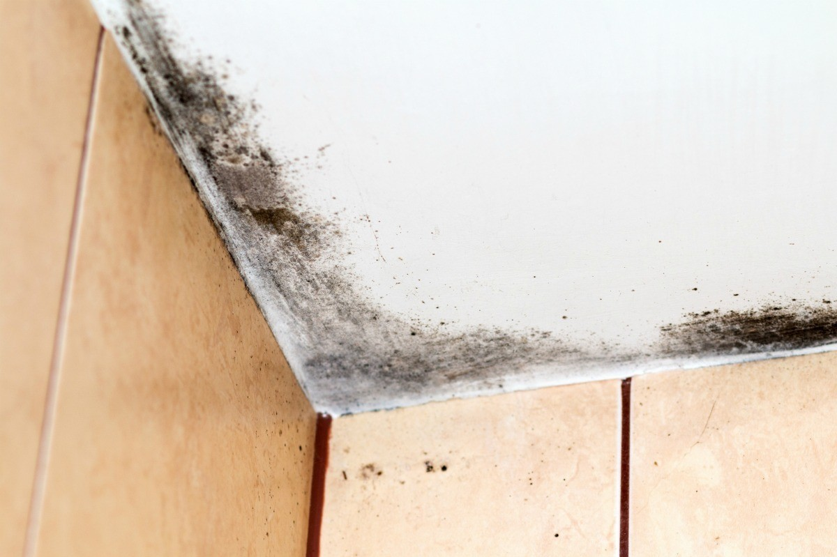 Black Mold On A Bathroom Ceiling