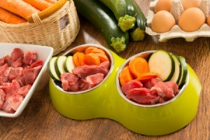 Cut meat and veggies in a dog food bowl.