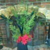 DIY Holiday Centerpieces - cedar and poinsettia decoration on hearth