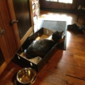 Oscar (Domestic Shorthair Cat) - cat in a box on the floor