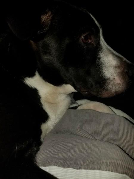 Potty Training an Abused Dog - profile
