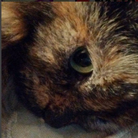 Jade (Long Haired Tortoiseshell Hemingway) - closeup of just one eye
