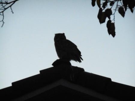 Before Winter Settled In - owl on roof peak