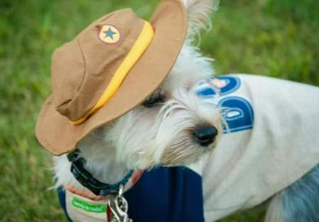 Chewbacca (Yorkie) - wearing a hat and white coat