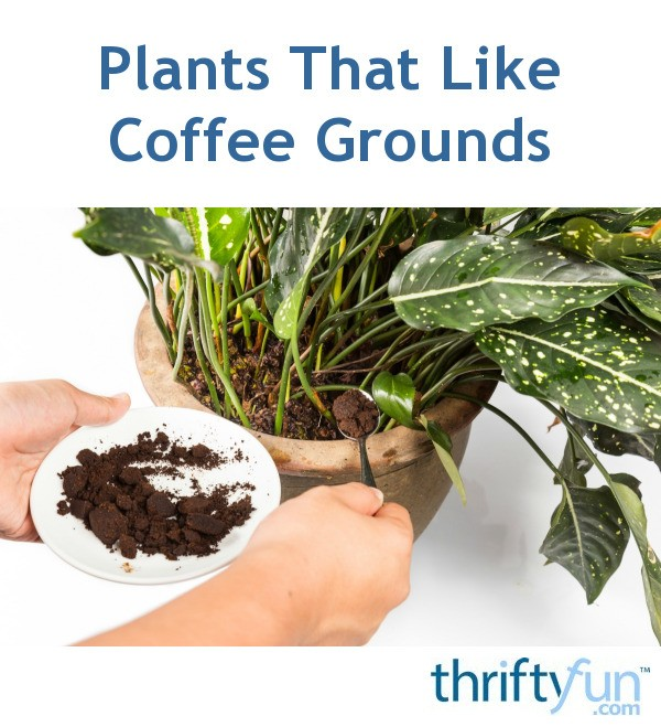Plants That Like Coffee Grounds Thriftyfun