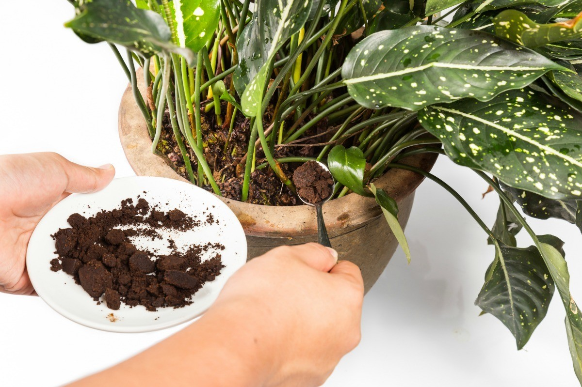 Plants That Like Coffee Grounds Category Fertilizer