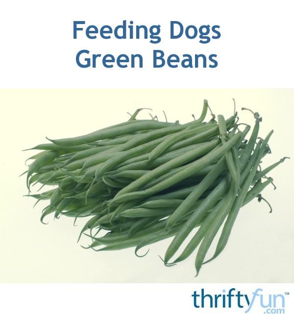 Can Dogs Eat Green Beasn